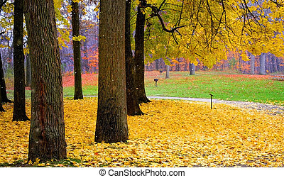 Fallen Leaves - yellow colored trees in a park during autumn...