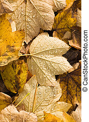Fallen leaves with waterdrops