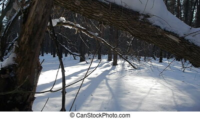 Fallen logs in winter forest at sunrise