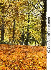 fallen loof, onder, bomen, in, herfst