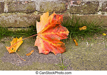 Fallen Maple leaf and seeds in autumn