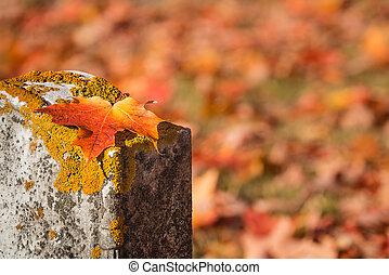 Fallen maple leaf on tombstone in autumn cemetery