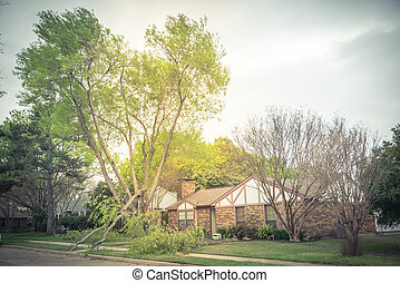 Fallen maple tree branch on sidewalk of residential house near Dallas, Texas, America
