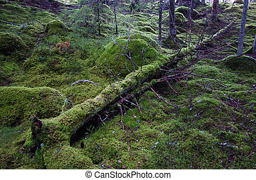 Fallen mossy tree trunk