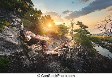 Fallen old tree in mountains at colorful sunrise. Landscape