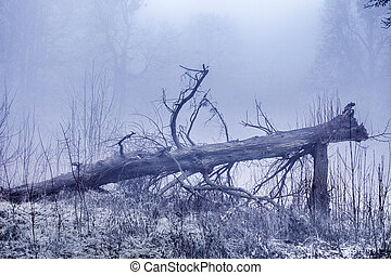 Fallen old tree lies. Foggy nature