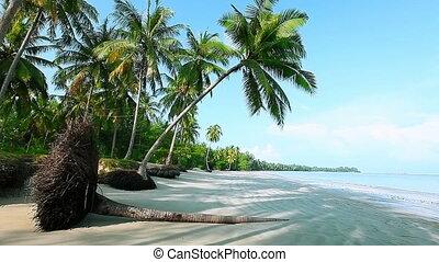 Fallen palm tree on the beach