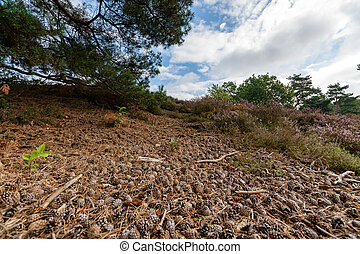 Fallen pine branch surrounded by pine cones and needles Under tree
