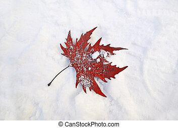 fallen red frozen leaf in the snow