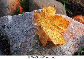Fallen - An autumn leaf laying on a rock