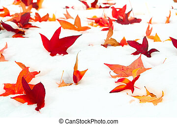 Fall leaves on a bed of snow