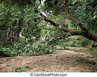 fallen tree        - fallen tree because of heavy storm