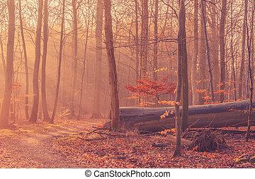 Fallen tree in a misty sunrise