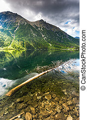 fallen tree in alpine lake