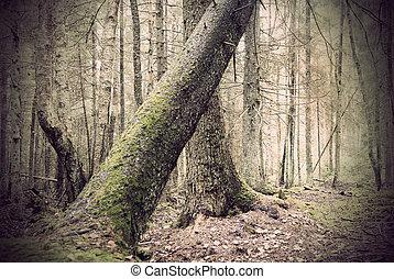 Fallen tree in spooky forest