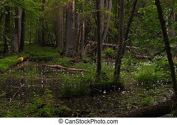 Fallen tree in the Bialowieza Forest