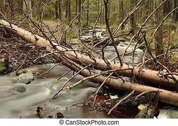 fallen tree in the forest