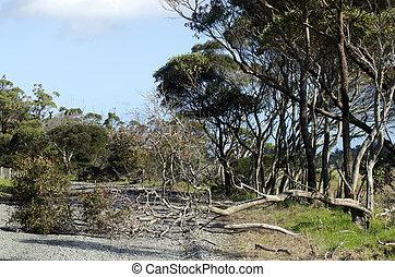 Fallen tree on a rural road