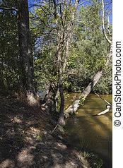 Fallen tree on the river, alberche riverbank in Toledo, Castilla La Mancha, Spain