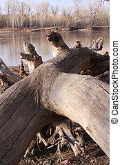 Fallen tree on the riverbank