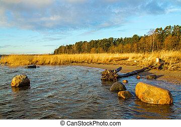 Fallen tree on the rocky ocean shore