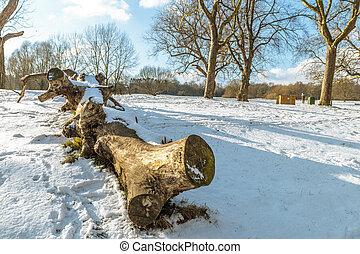 Fallen tree trunk in the snow
