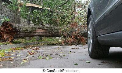 Fallen tree trunk on city street blocking cars movement - ...