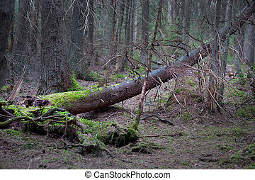 Fallen tree with fungus in spooky forest