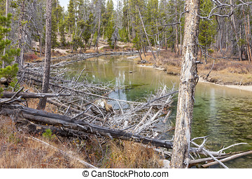 Fallen trees by redfish creek. - Logs lays in the foreground...
