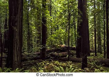 Fallen Trees in a Forest