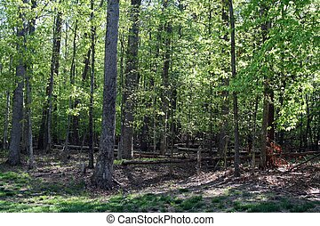 Fallen trees in woods from storm - A once beautiful wooded...