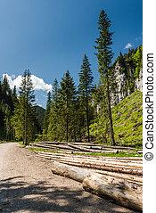 fallen trees logs by road side in mountains
