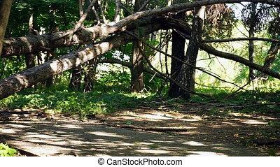 Fallen trees on road - Fallen trees on the road