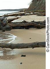 fallen trees on the beach