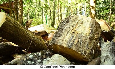 Fallen wood. The destruction of forests. Collapsed trees in...