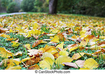 Fallen yellow and brown leafs in autumn park