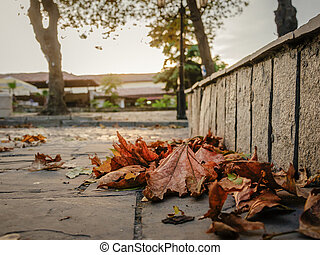 yellow autumn leaves - fallen yellow autumn leaves on the...
