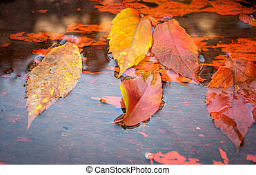 Fallen yellow leaves on the water in autumn