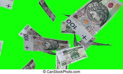 fallender , polnisch, zlotys, (loop)