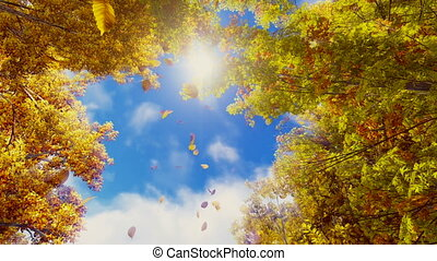 Falling autumn leaves against sunshine sky