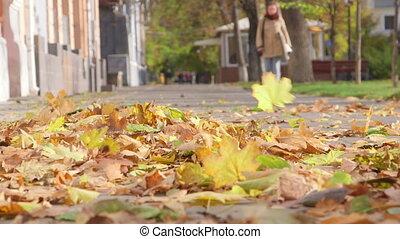 Falling autumn leaves blowing in the wind on sidewalk