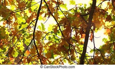 Falling autumn leaves close up.