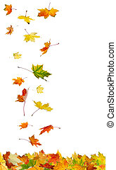 Falling autumn leaves isolated on white background.
