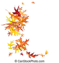 Falling Autumn Leaves - Falling autumn oak leaves isolated...
