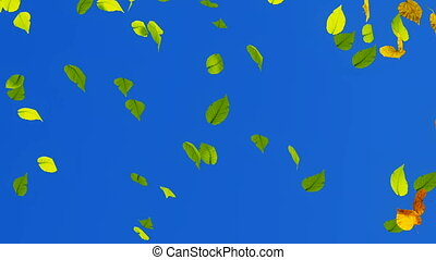 Falling autumn leaves video background