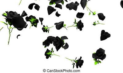 Falling Black Roses On White Background. 3DCG render...
