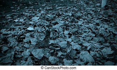 falling blue leaves full on ground.