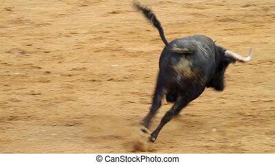 falling bull in the bullring. Powerful spanish bull,...