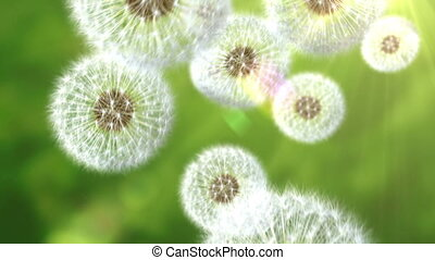 Falling dandelions, abstract background. seamless looping 3d...