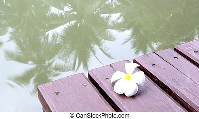Falling frangipani on the bridge